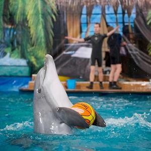 Дельфинарии, океанариумы Нарофоминска