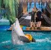 Дельфинарии, океанариумы в Нарофоминске